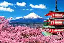 DU LỊCH NHẬT BẢN HOA ANH ĐÀO OSAKA - KYOTO - NAGOYA - FUJI - TOKYO